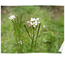 Pretty White Flowers Poster