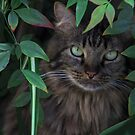 Hiding in the Bushes by heatherfriedman