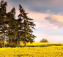 Blue green and yellow by JEZ22