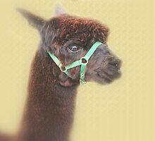 Alpaca - Brown - by Evita