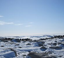 Adelie Penguin Colony - Peterson Island by cactus82