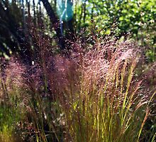 Summer Grass  Cerro Catedral Trek  Argentinian Andes by geophotographic