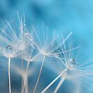 Dandelion blues by Photos - Pauline Wherrell