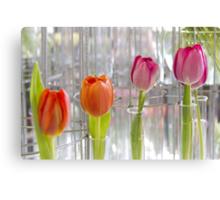 Test tube tulips Canvas Print