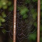 spider web with crystals. by lettie1957