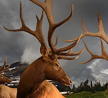 An Elk Affair by CarolM