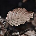 Leaf by christof1395