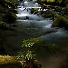 Goat Creek Sunbeam - Snoqualmie N. F. by Mark Heller