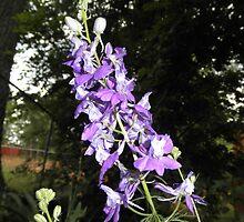 Pretty Purple Flowers by ack1128