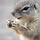 World Peace? ..I Pray For Nuts.. Duh!! by Shaun Colin Bell