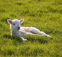Lazing on a sunny afternoon by Christopher Cullen