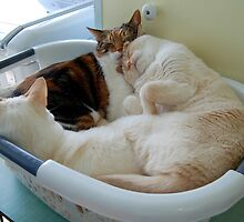 Lola, Monte & Oscar in the Basket --- PG Rated by montecore827