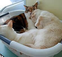 Lola, Monte & Oscar in the Basket --- X Rated by montecore827
