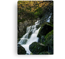 Lower Fagus Forest Falls Canvas Print