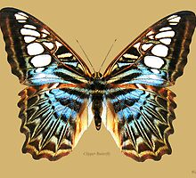Clipper Butterfly by Walter Colvin