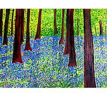 Springtime Splendour Photographic Print