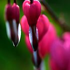 Bleeding Heart 2 by Chris Kiez