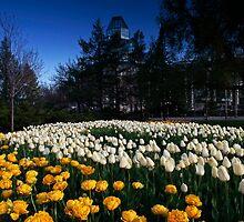 Ottawa Tulip Festival 2012 by Chris Kiez