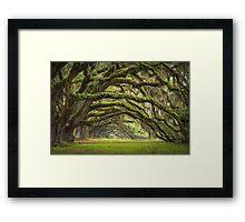 Avenue of Oaks - Charleston SC Plantation Live Oaks Framed Print