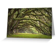 Avenue of Oaks - Charleston SC Plantation Live Oaks Greeting Card