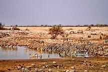 Waterhole in Etosha National Park/ Namibia 2 by globeboater