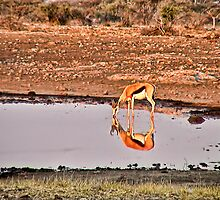 Waterhole in Etosha National Park/ Namibia 5 by globeboater