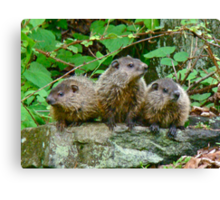 A Trio of Trouble   Canvas Print