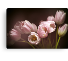 Those pink tulips Canvas Print