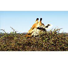 Acacia Tabletop Photographic Print