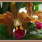 Orchid by Margot Ardourel