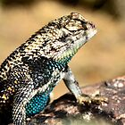 Desert Spiny Lizard by Saija  Lehtonen