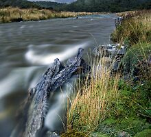 Cascade Creek - Milford Rd by Michael Treloar