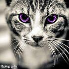 Kitten Creative by KBG-Photography