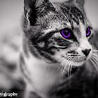 Kitten Creative VI by KBG-Photography