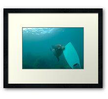 Sea lion biting a diver flipper, Underwater Framed Print