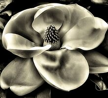 My Magnolia by SuddenJim
