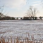 Snow on the fenland by JohnYoung