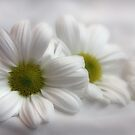 White on White by Julesrules