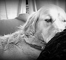 Resting Again!! by PPPhotoArt