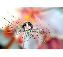 Dandelion Flower Drop Photographic Print