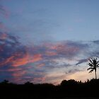 Bali Palm At Dawn by cactus82
