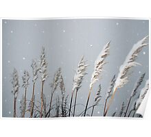 snowy covered reeds Poster
