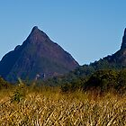 Mt Beewah and Mt Coonowrin by Jaxybelle