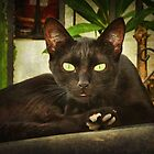 Black cat, green eyes. by Maria  Gonzalez