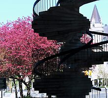 stairs of laurier by Bruce Miller