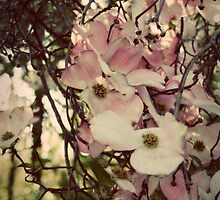 Tree Blossoms 1 by lunatorium