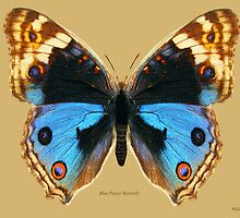 Blue Pansy Butterfly by Walter Colvin