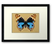 Blue Pansy Butterfly Framed Print