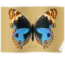 Blue Pansy Butterfly Poster