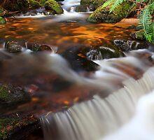 """""""Forester Cascades"""" by Husky"""